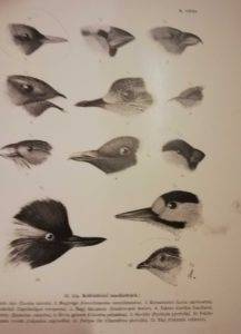 chernel magyarország madarai