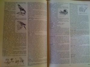 erdészeti vadászati faipari lexikon2