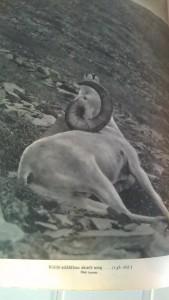 alaszkában vadásztam