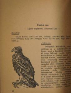 Pátkai Imre - Ragadozó Madaraink 1947