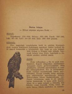 Pátkai Imre - Ragadozó Madaraink nimrod kiskonyvtar