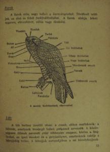 Pátkai Imre - Ragadozó Madaraink ornitologia