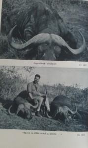 csui afrikai vadásznapló