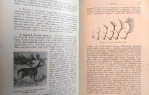 lovassy emlősök