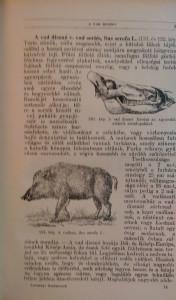 magyarország gerinces állatai