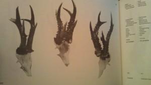 őztrófeák