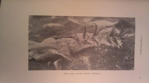nadler herbert vadászkönyv 1926