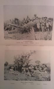 elefántvadászatok