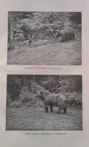 medve vadászata