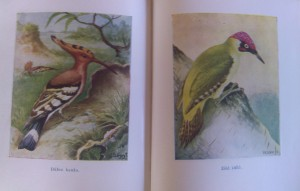 antik kerti madarak könyv