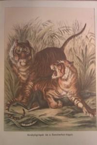 királytigrisek vadászkönyv