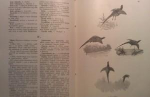 kkessy vadászkönyve
