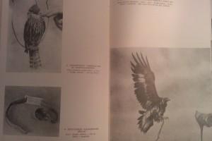 régi solymászati könyv