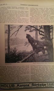 vadászújság 1936
