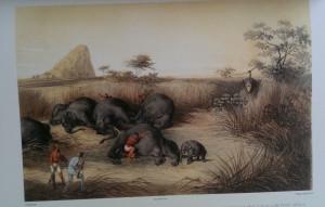 andrássy vadászkönyve