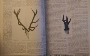 1930 vadászlap