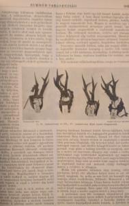 nimród 1928 vadászlap