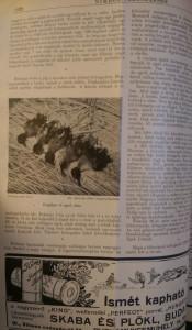 nimród vadászújság 1939