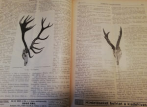 nimród vadászújság 1931
