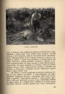 Gyöngyöshalászi Takách Gyula – Vadászösvényeken