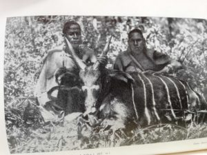 Gróf Széchenyi Zsigmond – Elefántország eredeti kiadas