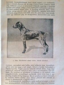Ötvös Balázs - A vizsla és tanítása ritka kutyas konyv