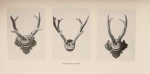 Az őz tenyésztése, óvása és vadászata regi konyv