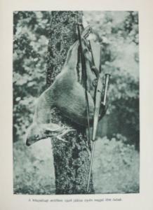 Nadler Herbert Vadásznapok vadászévek
