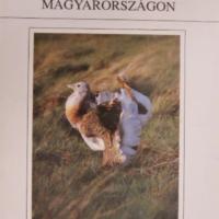 A túzok Magyarországon