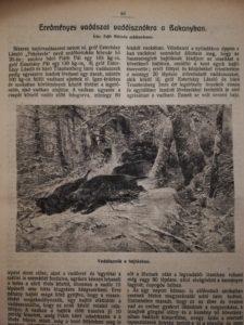 vadászat a Bakonyban