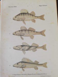 Herman Ottó - A magyar halászat könyve