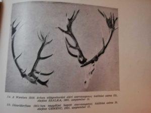 vadgazdasági bemutató 1956