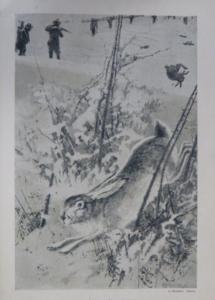 Az őz és nyúl természetrajza és vadászata 1