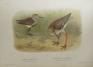 Magyarország madarai chernel 5