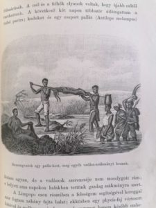 Holub Fokvárostól a Masukulumbék országába
