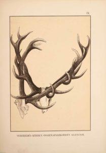 Balkay Adolf - A szarvas és vadászata antik