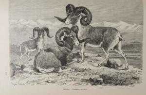 Khinai Birodalom természeti viszonyainak és országainak leírása