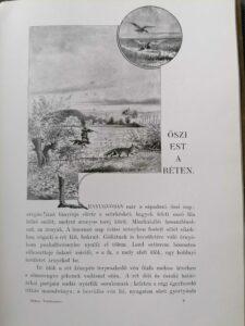 Makay Béla - Verőfényben könyv