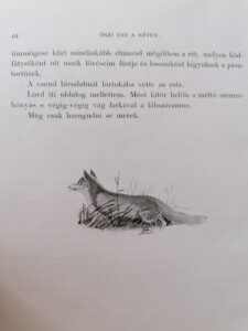 Makay Béla - Verőfényben vadászkönyv
