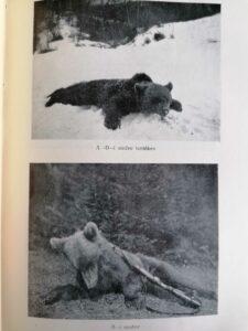 Justh Ödön - Vadásznapló töredékek medve vadászat