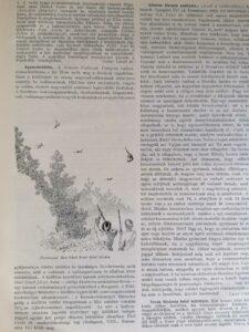 A Természet 1932 evfolyam
