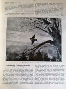 A Természet 1932 nadler herbert